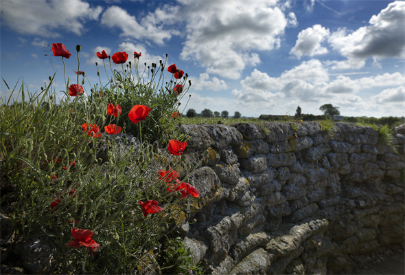 HEADER Poppies trench.jpg