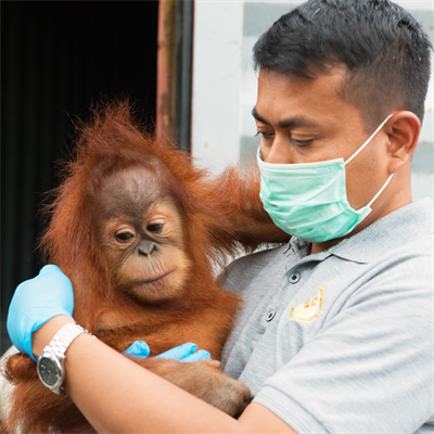 Panut-with-orangutan_1080x1080.jpg