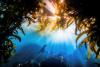 Grand Prize winner 2019 California Sealion, Monterey Bay © Tyler Schiffman, USA.jpg