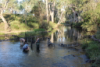 UNSW Science Platypus research image 3 - Picture by UNSW.JPG