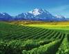 Helan Mountain's East Foothill Wine Region.jpg