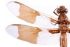 Dragonfly-Christopher-Johnson.jpg